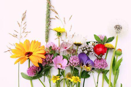 Beautiful wild field flowers isolated on white Stok Fotoğraf