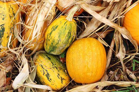 Fall outdoor pumpkin at kitchen garden