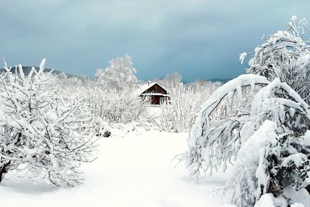 Snowy winter landscape with snow, trees and small village house