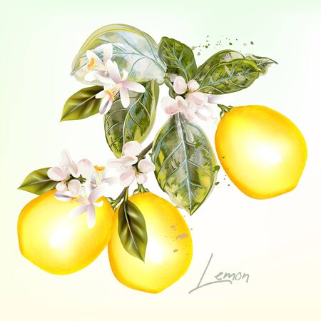Botanical with lemon and flowers in vintage style Çizim