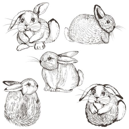 Collection of vector cute bunnies for design Çizim