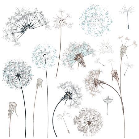 Set of vector hand drawn dandelions for design Çizim