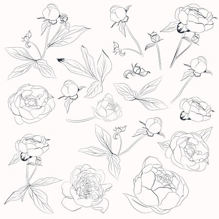 Big vector collection of vector peony flowers shapes in line