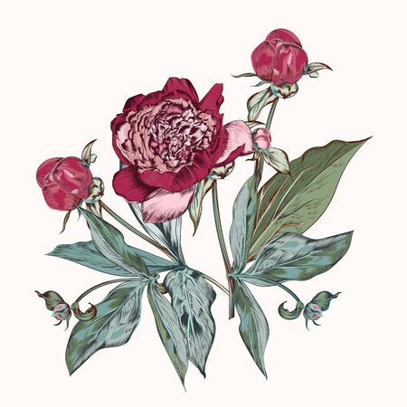 Botanical vector hand drawn illustration with peony flower in vintage style