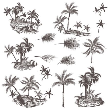 Big collection of hand drawn palm trees for design, vector illustration