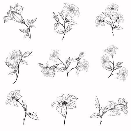 Collection of elegant vector rustic flowers for design