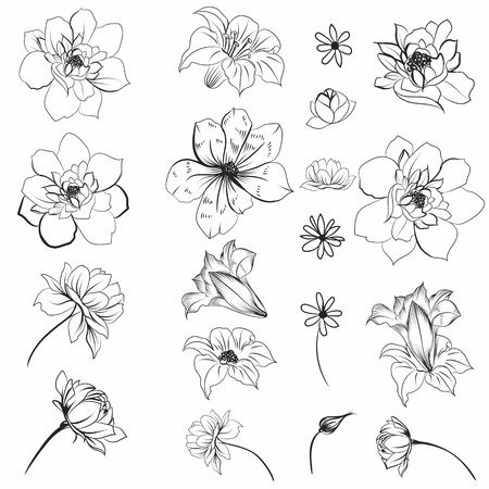 Collection of vector daisy flowers for design