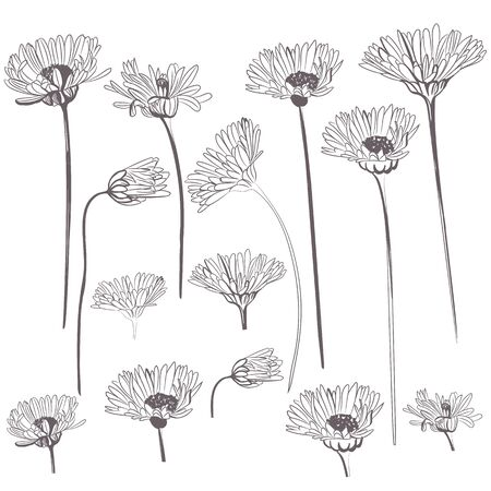 Collection of rustic vector flowers, buds for design