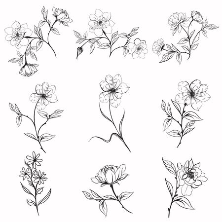 Collection of vector elegant rustic plants for design