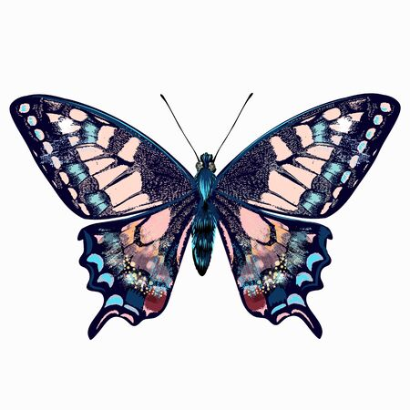 Beautiful hand drawn pink blue butterfly vector illustration isolated on white awesome for T-shirts prints 일러스트