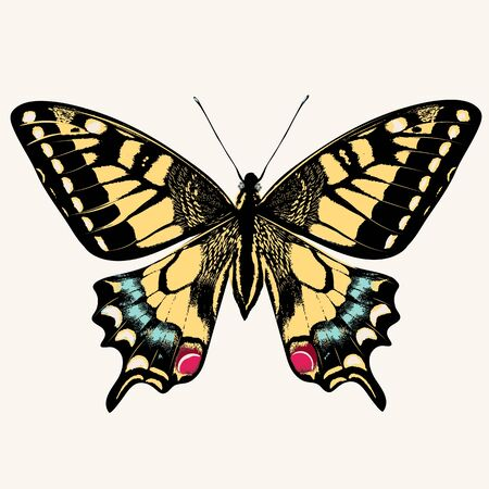 Beautiful swallowtail butterfly vector illustration isolated on white