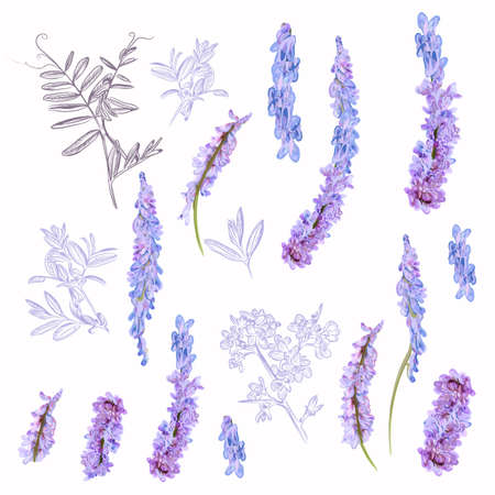 Collection of vector field purple flowers for design