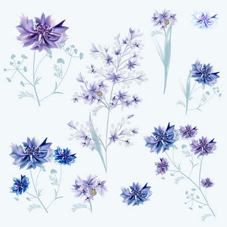 Collection of vector cornflowers in blue and purple colors