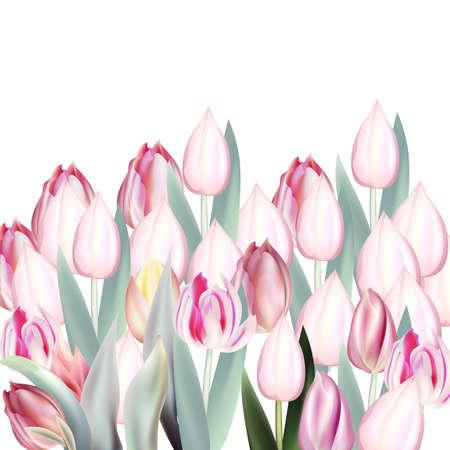 Floral vector illustration, vector pink tulips on white background Çizim