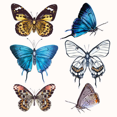 Collection of vector realistic butterflies for design in vintage style