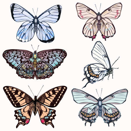 Set of vector realistic butterflies for design in vintage style