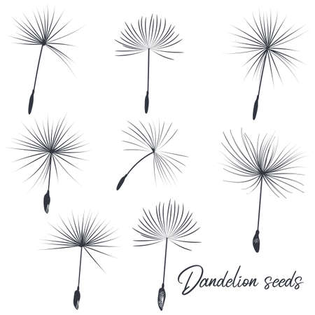 Collection of vector dandelion seeds