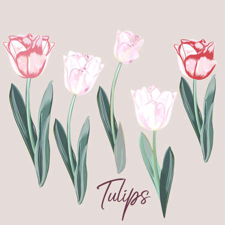Collection of vector hand drawn tulips in watercolor style Çizim