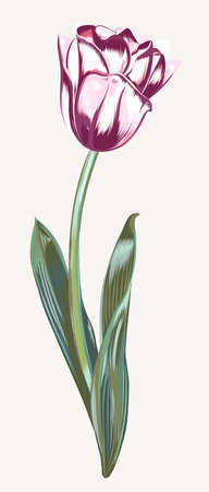 Hand drawn vector tulip in realistic style