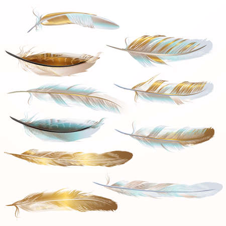Collection of vector golden feathers for design in realistic style Çizim