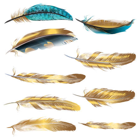 Set of vector realistic feathers isolated on white Çizim