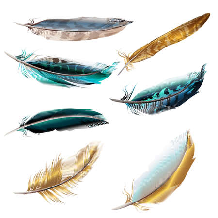 Collection of vector realistic feathers for design