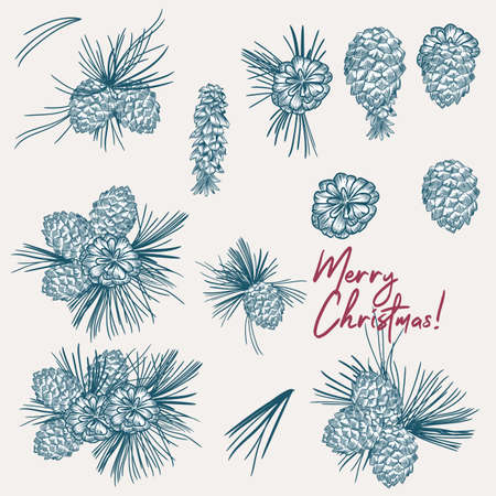 Collection of vector Christmas pine tree cones, hand drawn vintage style