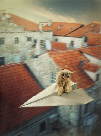 Dog flying on the paper plane in the Dubrovnik old town Stok Fotoğraf