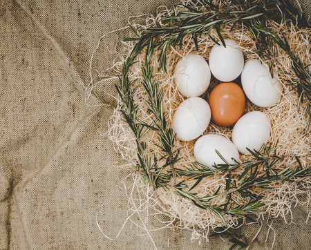 laying egg: Chicken eggs in nest