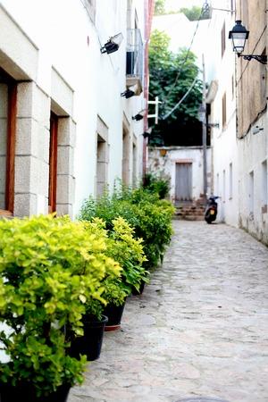 Plants in pots on the street. Tossa de mar