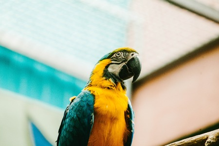 Macaw Parrot sits on a branch. Animals Stock Photo