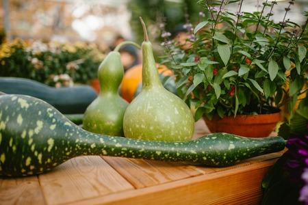 Green pumpkin. Nature food Stock Photo