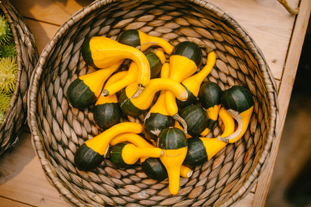 Yellow pumpkin basket. Nature. Stock Photo