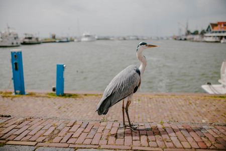 Stork close-up on the waterfront. Animals Stock Photo