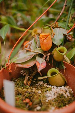 carnivorous plant. flower Stock Photo