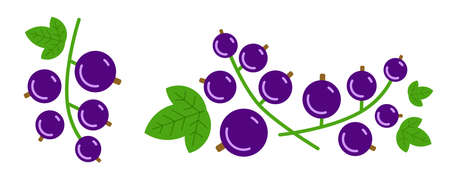 Black currant bunches on white. Vector isolated. Vektorgrafik