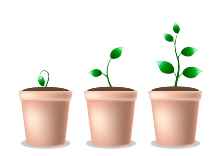 Young growing plant in a pot- from germination to adult plant - eps10 vector illustration Illustration