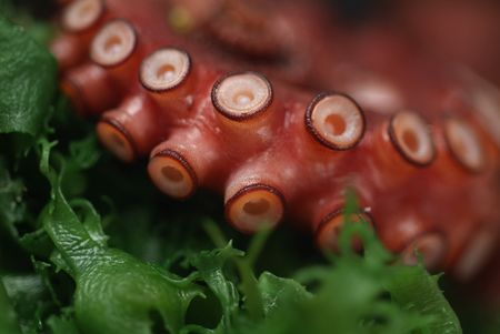 촉수: Delicious whole octopus tentacle coiled up ready to splash up onto your sushi plate