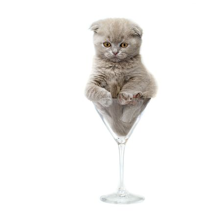 Kitten in a glass. isolated. Stock Photo