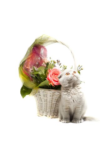 Basket of flowers and a kitten isolated  photo