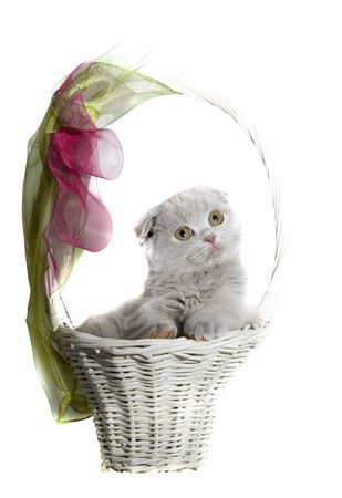 Kitten sitting in a basket isolated Stock Photo