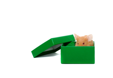 mouse n a box. Isolation on white photo