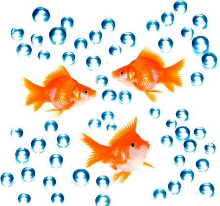 goldfish with bubbles photo