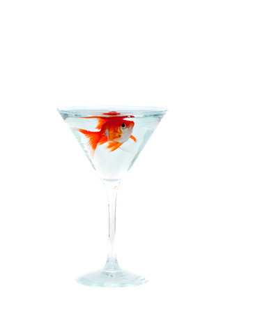 goldfish moving smoothly in wineglass of water photo