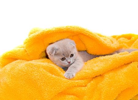 Beautiful kitten in a yellow towel