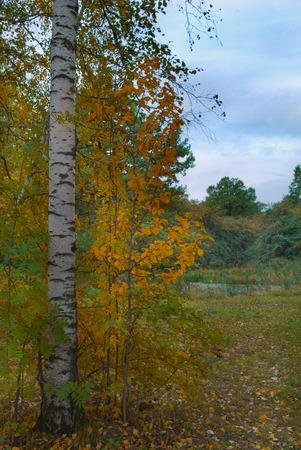 descriptive: Autumn landscape.