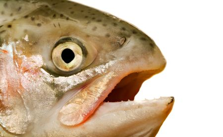 Head of a fish. Isolation on white. Stock Photo - 1851958
