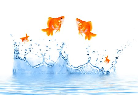 Goldfish is jumping out of the water Stock Photo - 2174669