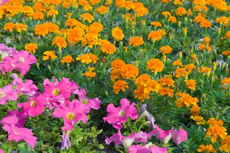 Background from garden flowers Stock Photo - 2757375
