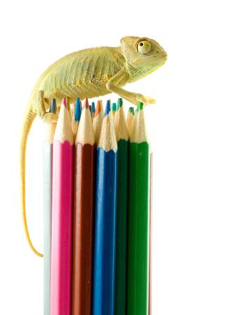 align: The lizard and color pencils.  Stock Photo
